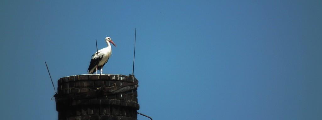 Náš Pardubický čáp na komínu čistírny
